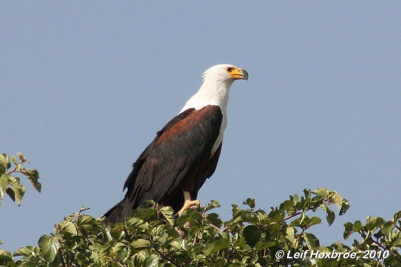 afrikas fugle